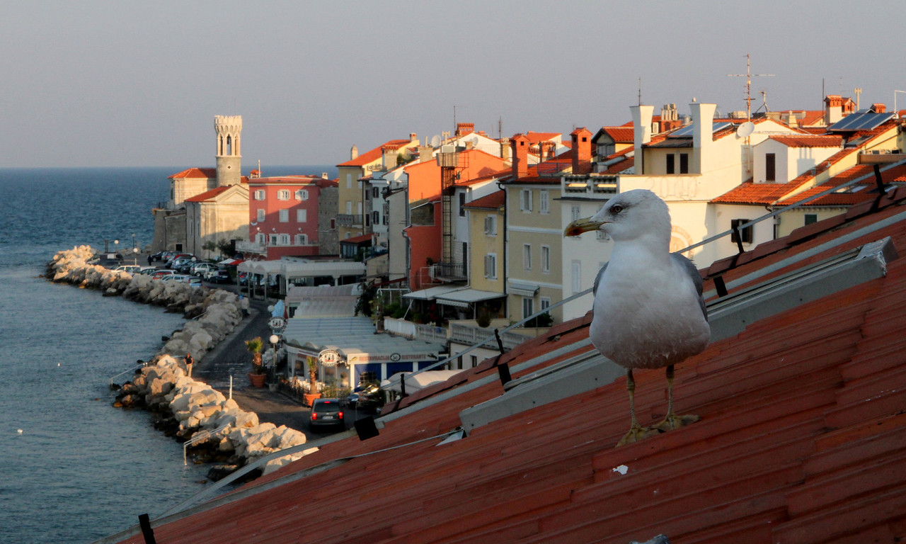 Each morning this hungry and smart sea gull came to watch the outdoor breakfast area as the day begins.