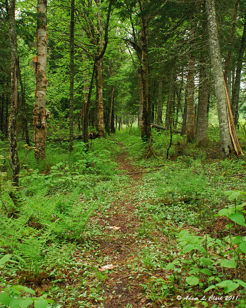The moose alley trail, part of the Cohos Trail