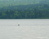 A loon while fishing with my aunt and uncle