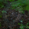 A spider web near the outhouse with some morning dew on it.  Liliana wanted to look for this every time we were near it