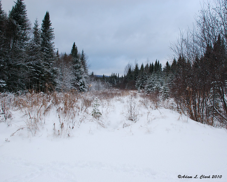 Looking further up the old logging road the camp is on