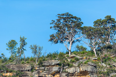 Sandstone escarpment, Pittwater, NSW