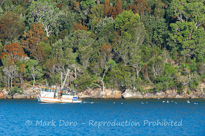 Fishing boat, Pittwater, NSW