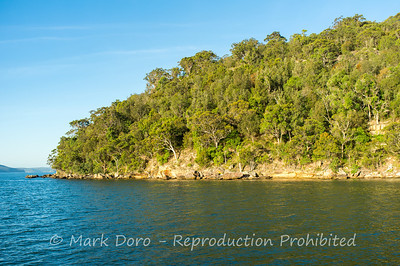 Treed shoreline, Pittwater, NSW