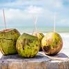 Brazilian Coconuts