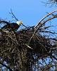 Eagles Nest near Homer, Alaska