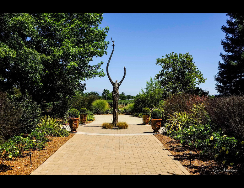 Many of the vineyard companies also present fabulous gardens to admire in addition to the wines they make.  This is the courtyard entrance to Deloach.