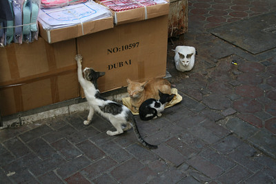 Cats - Gold Souk - Dubai - November 25, 2009