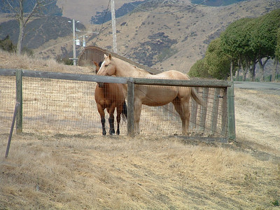 Horses at Bridgecreek Ranch, San Luis Obispo, California
