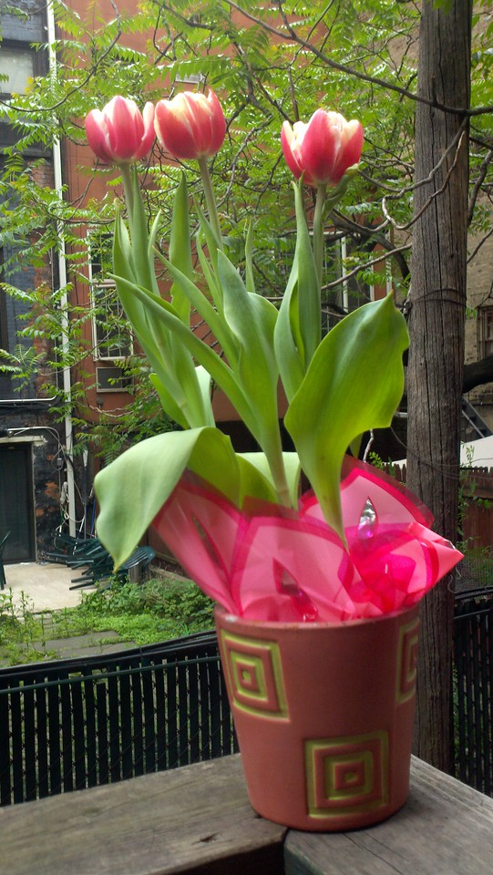 Tulips for Mothers Day