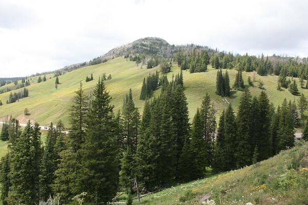 Dunraven Pass, Yellowstone