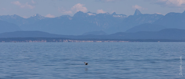 Seal Bay in Comox, BC, Canada. July 22, 2018