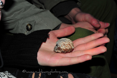 Supposedly a shell from 1800!