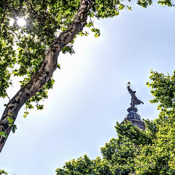 Looking up through the trees on Av de Mayo