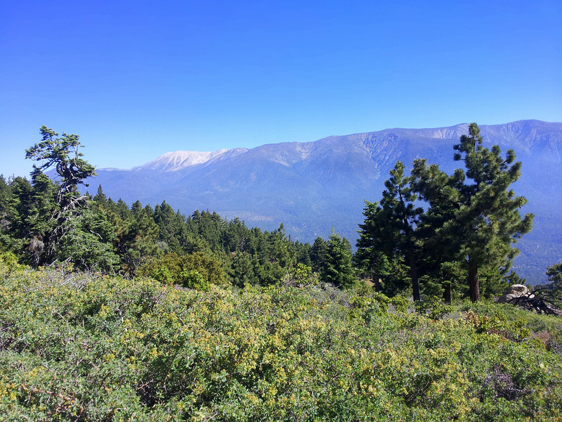 That light gray peak in the background (left) is Mt San Gorgonio which is over, 11,000 feet tall.