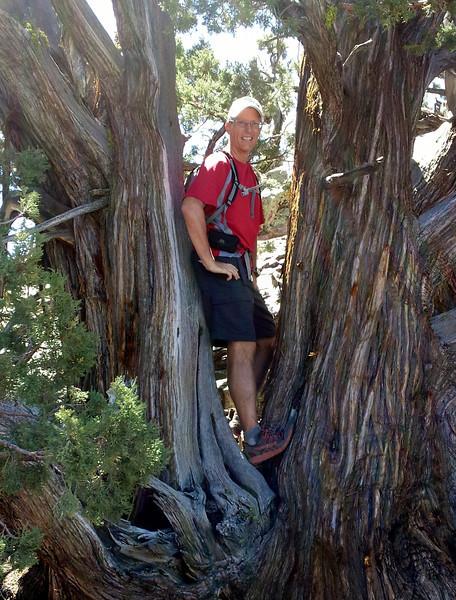 Me, up a tree.