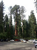 At Sequoia National Park.