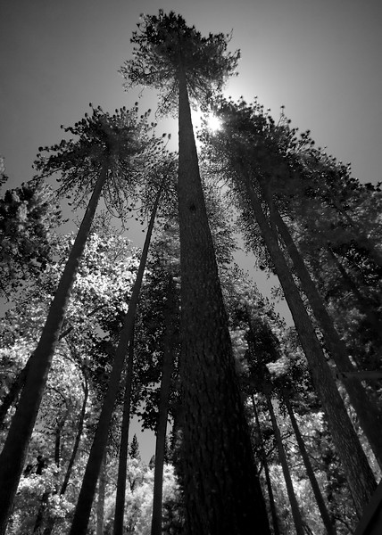 Tress in Yosemite National Park