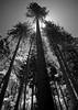 Tress in Yosemite National Park