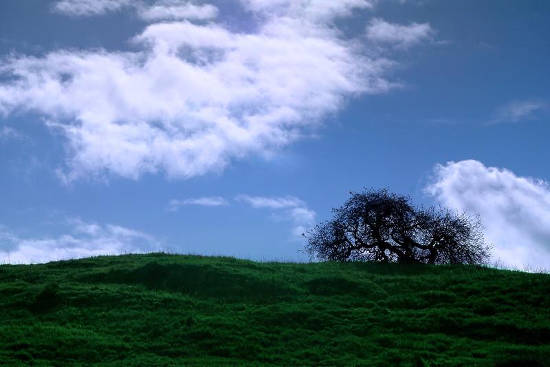 Hillside at San Luis Reservior, California