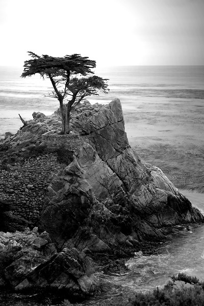 Lone Cyprus, Monterey, California