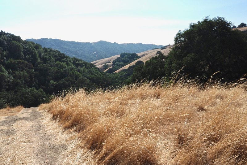 All images captured along pleasanton ridge atop castle ridge staging area on old foothill road. stretch is part of east bay regional park district. taken august 14, 2018.