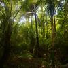 Inside a Pohnpei jungle.