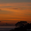 A jungle tree is silhouetted against the orange sunset.