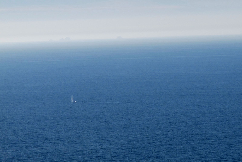 While we were on the lighthouse platform, we spotted five Gray Whales about a mile out heading south for the winter.