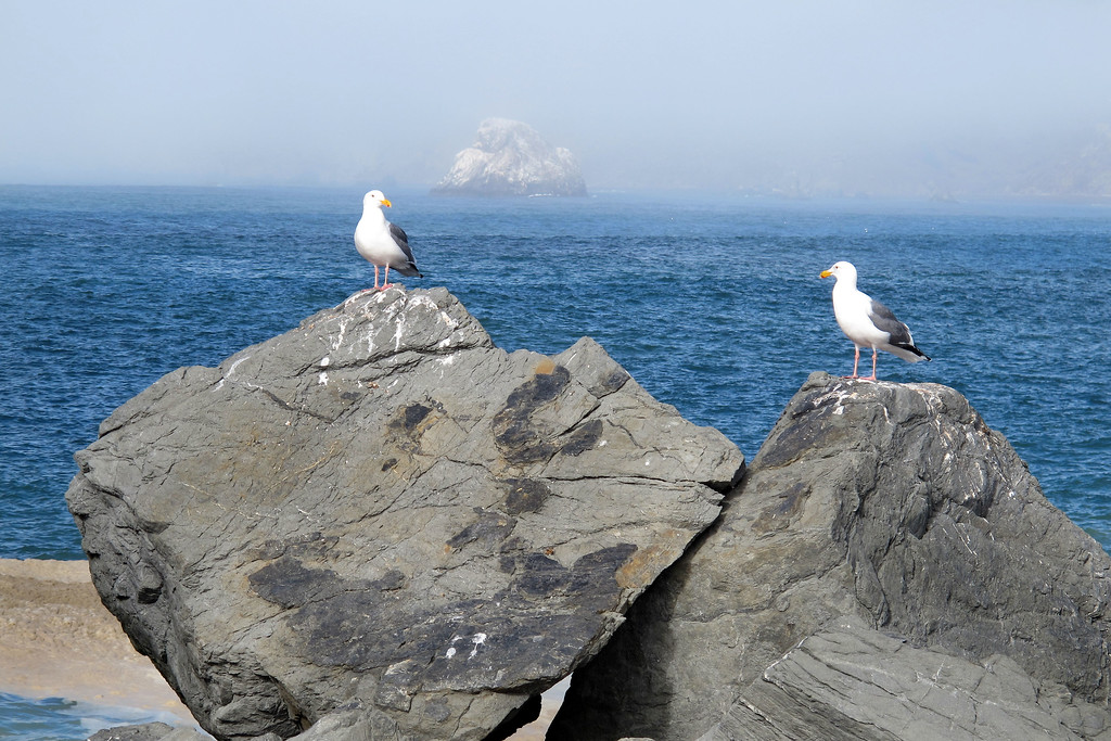 Couple of gulls on the rocks.