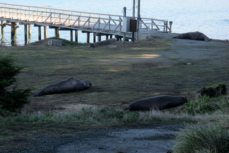 As we approached the Lifeboat Station, we came upon four big male seals sleeping next to the road.