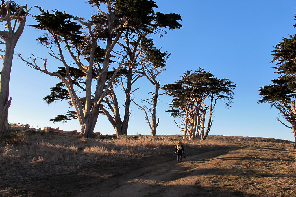 On the Tomales Point Trail.