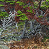 Trees at Point Lobos State Park.