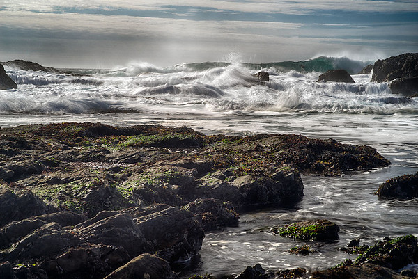 Point Lobos and Watsonville 2014