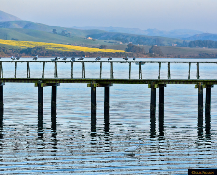 Evening on Tomales Bay, CA