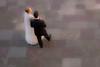 Bride and groom, Krakow, Poland