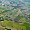 Since this is Netherlands, I am guessing that the bright colored fields are Tulips.