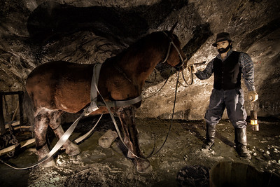 In the Wieliczka mine, horses worked from 16th century. They carried salt along galleries or moved the treadmills ( hauling devices).