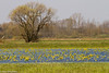 Biebrza marshlands