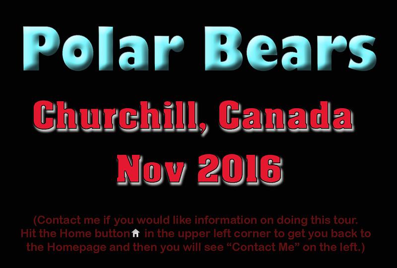 PolarBear Title2