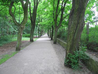Achter het strand een bos of park