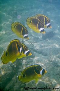 Snorkeling in Kahalu'u Bay