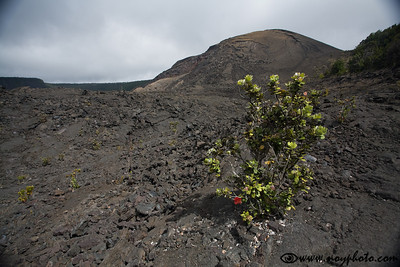 Inside Kilauea Iki crater
