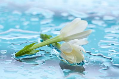 CAD35053 - tiarè fiore simbolo della Polinesia