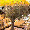 Short olive tree.