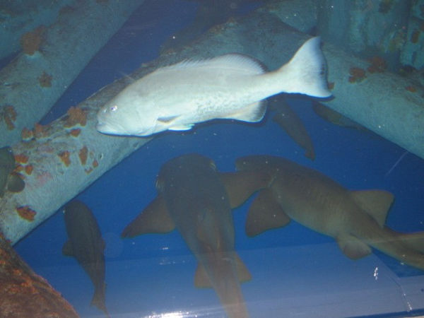 Nurse sharks doing what they do best - resting.