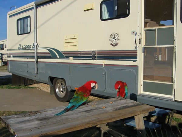 As always, lots of pictures of the birds. They loved the trip and were able to spend quite a bit of time outside. Hank on left. Jasper on the right.