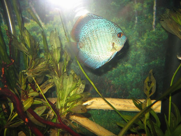 This is one of the fish in the Amazon exhibit.