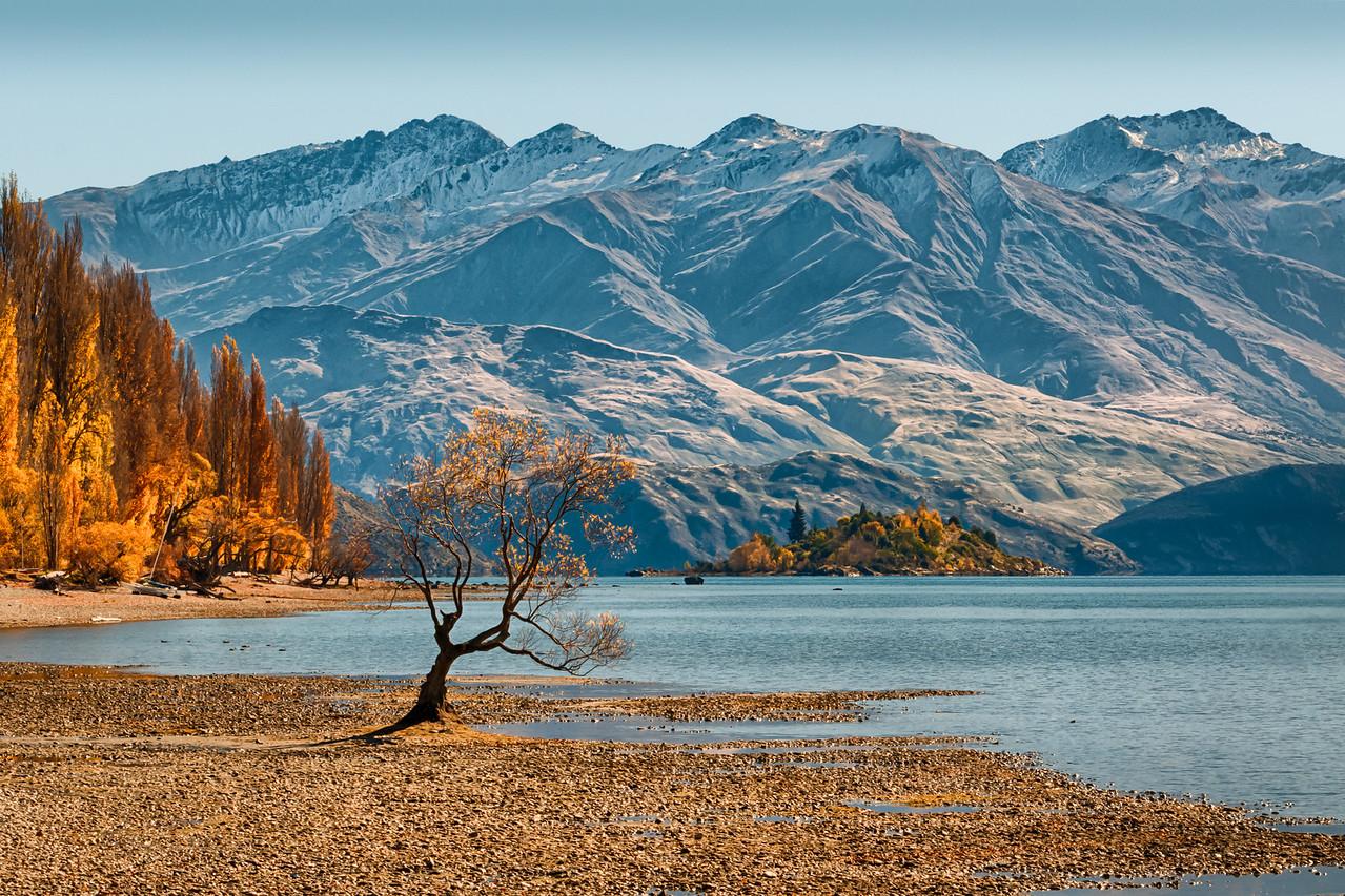 Lone Tree in Autumn, Wanaka