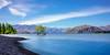 Lake Wanaka Tree Summer Sun